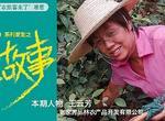 """""""雞司令""""王云芳:26年如一日,用堅韌書寫創業傳奇!"""