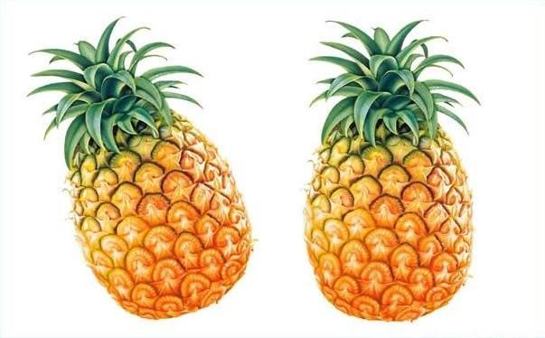 黄梨和西瓜能一起吃吗?黄梨和西瓜一起吃好吗?[图]图片1
