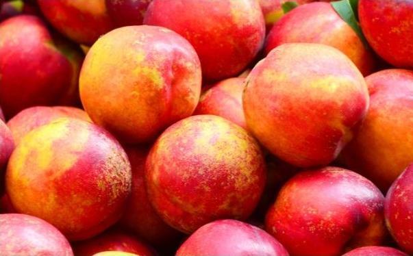 桃子主要品种介绍(桃子品种大全)[图]图片1