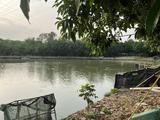 南沙7亩水域及水利设施用地 — 垂钓场坑塘水面转包