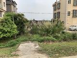 南沙榄核镇江边700平农村宅基地转让