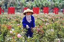 中国农村改革40年回顾