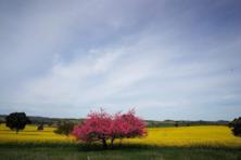 中央农办农业农村部发文,明确农村宅基地改革为农经管理职能