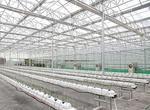 江蘇響水建成全國單體最大蔬菜工廠(圖)