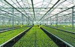 白银会宁蔬菜产业蓬勃发展(图)