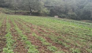 河南三门峡卢氏县450亩耕地出租可种植中草药,散养基地租金:18万元