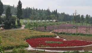 云南昆明西山区277亩耕地 山地 林地转让
