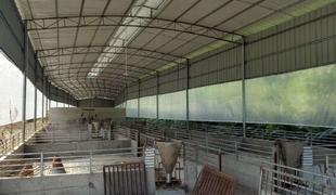 肇慶德慶播植鎮1.2萬方證照齊全豬場出租轉讓