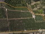 增城60畝芭樂場地轉讓,十二月初大收成,預計15-20萬斤!