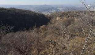 山西晉中左權縣1754.49畝山地 林地轉讓